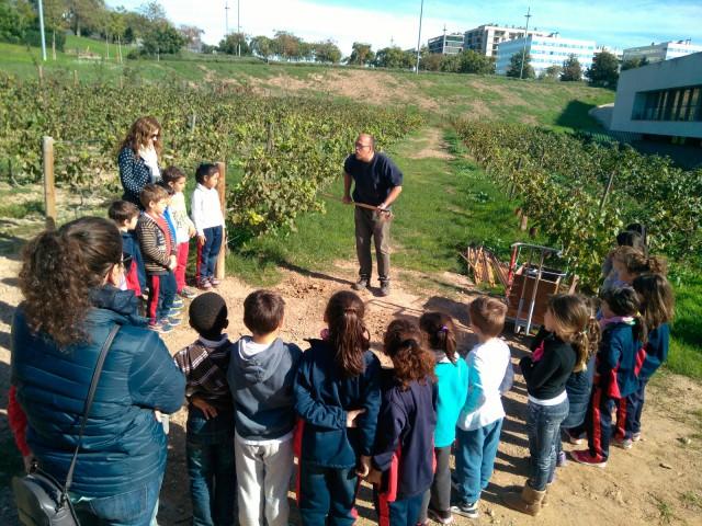 El PMES i el conreu de les vinyes