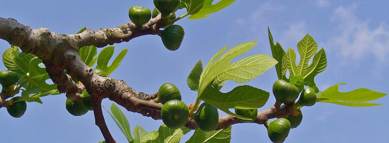 """""""Panses i figues i nous i olives…"""""""